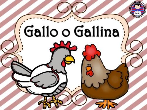 ciclo de vida de la gallina 6