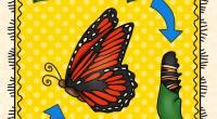 """El ciclo de vida de las mariposas es muy variable, puede durar desde unos pocos días hasta varios meses, dependiendo de la especie. Un claro ejemplo es la especie """"Bombix […]"""