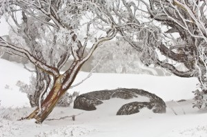 winter solstice, chinese medicine, kidney energy, fear