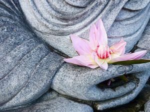 Budha Blossom