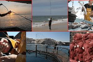 pêche et aquaculture en PACA