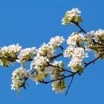 Licence pro Chimie et procédés pour le développement durable et l'environnement