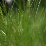 Master écologie biosciences de l'environnement