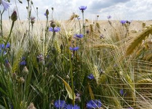 formation en restauration écologique