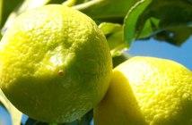 offres d'emploi agriculture biologique