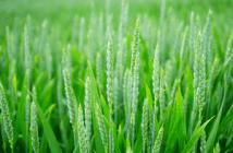 production agricole respectueuse de l'environnement