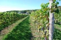 licence pro Cosya agroécologique