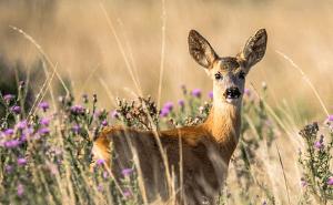 formation faune sauvage (photo Lubos Houska)
