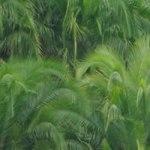 Master BioGET : biologie végétale et écosystèmes tropicaux