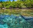 formation écologie tropicale