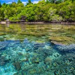 Master écologie tropicale : ECOTROP