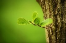 stage compensation écologique