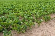 formation agroressources et environnement