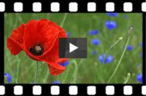 Vidéothèque Métiers de la protection de la nature