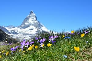emploi environnement en Suisse