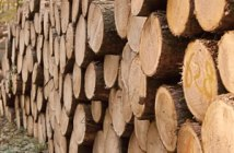 Vidéothèque Métiers forestiers