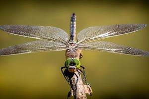 entomologie études des insectes