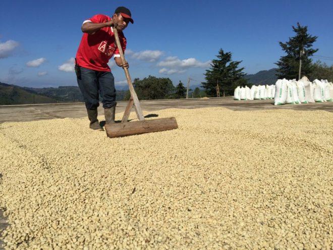 Guatemala Santa Sofia Coffee