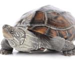 Tortoise indicating lack of speed