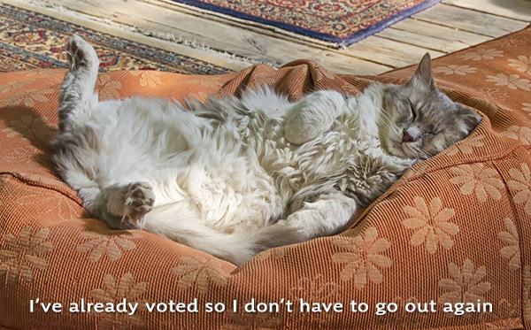 cat relaxing becuase its already voted