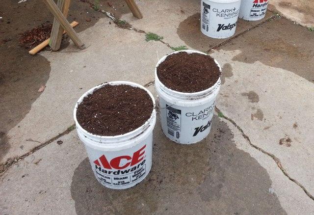 Tomatoes - 5 gallon bucket