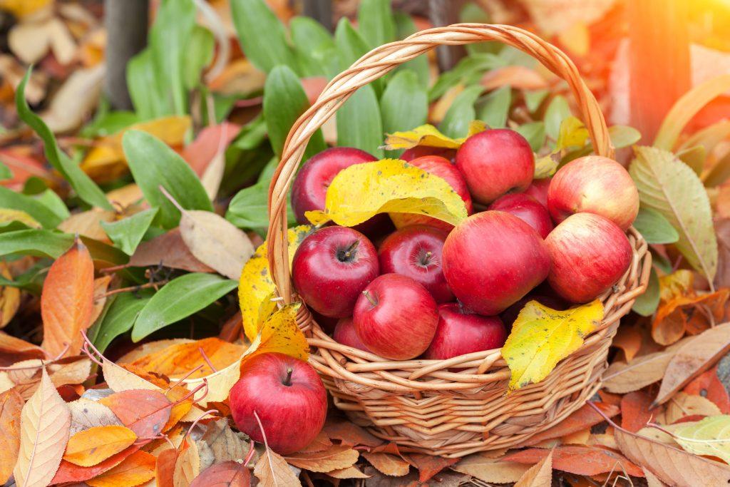 fall festivals in orlando