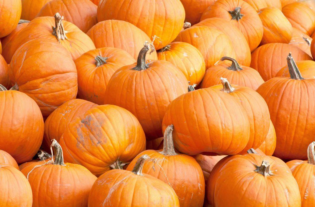 pumpkin patches in orlando