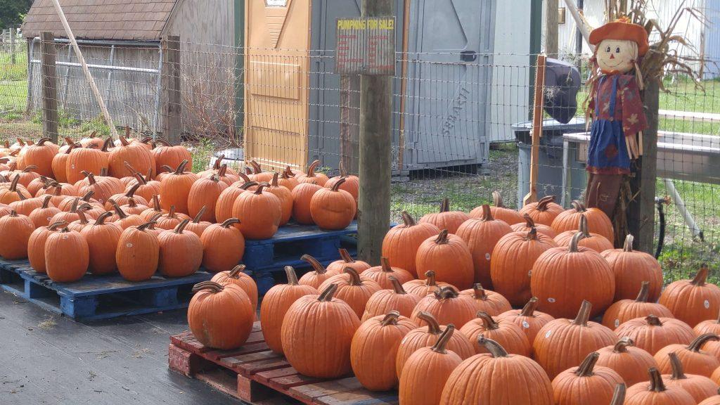 pumpkin patches orlando