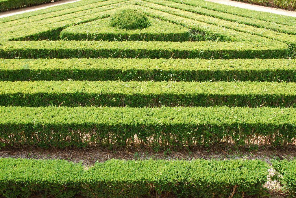 corn maze orlando