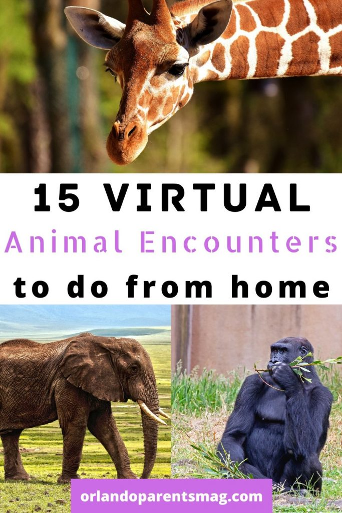 animal tours for kids