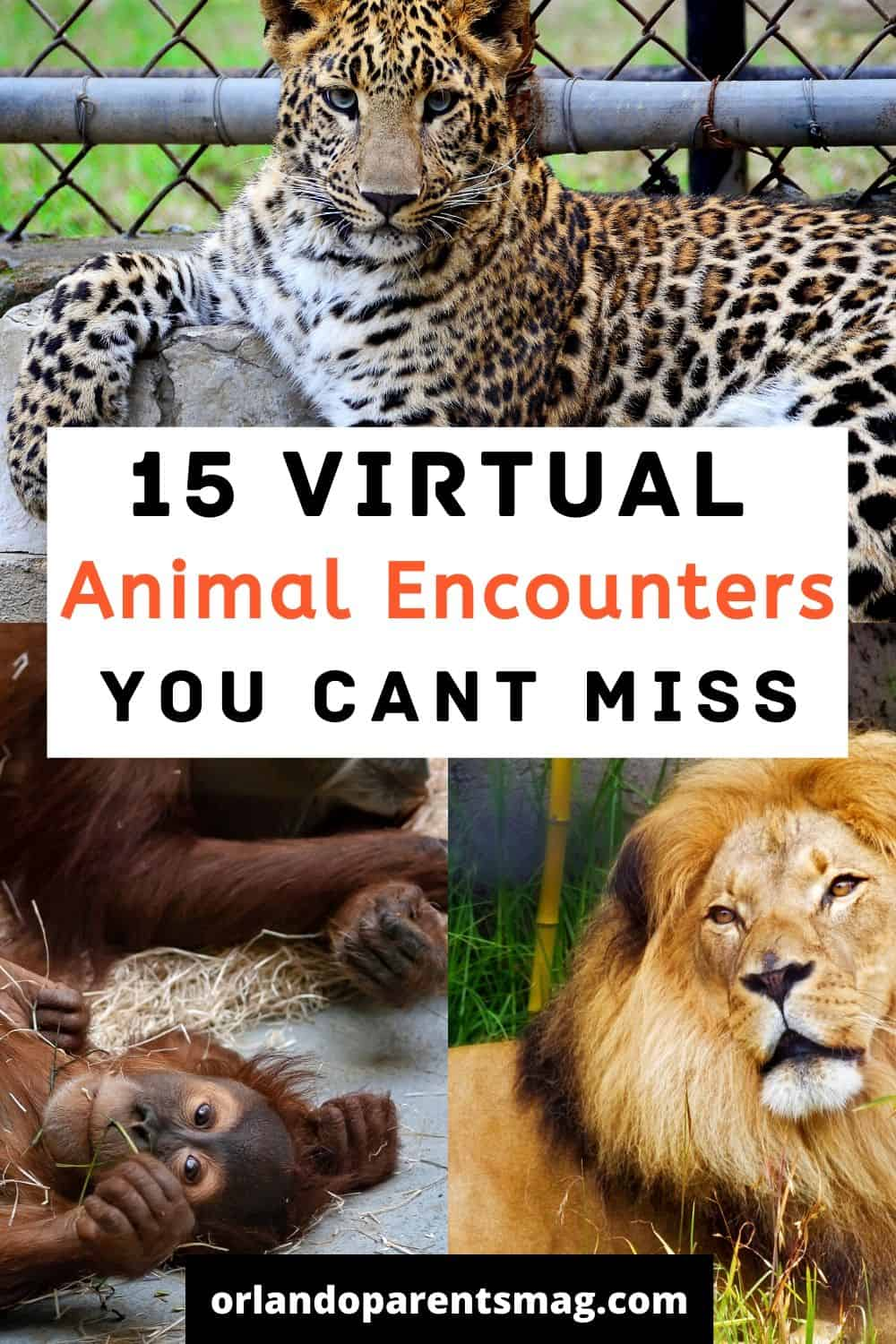 virtual animal tours