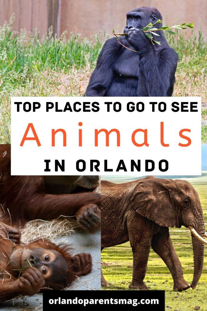 orlando animals