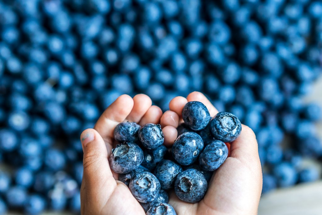 pick blueberries orlando