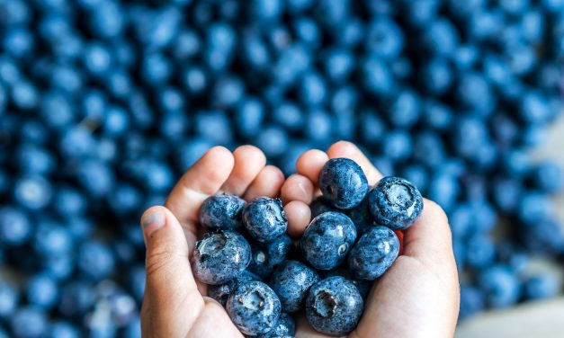 Where to Pick Your Own Blueberries Near Orlando