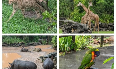 Things to do at Central Florida Zoo with kids