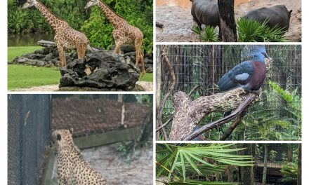 Fun Things to do at the Brevard Zoo