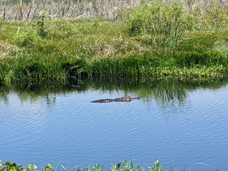 Lake Apopka Wildlife Drive: A Fun Activity with Kids