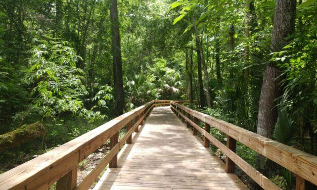Orlando State Parks: 15 Parks in and Around Orlando
