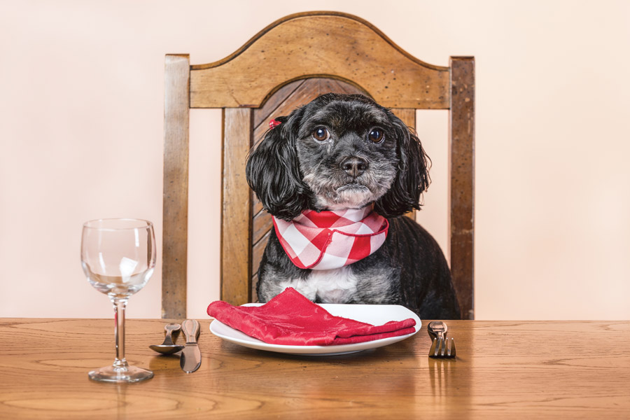 dog at table with napkin