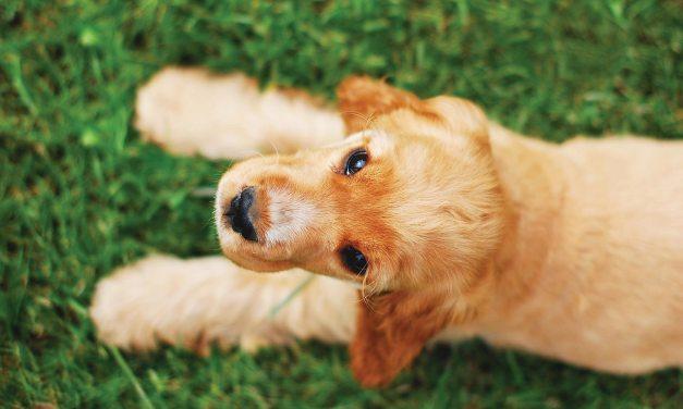 Enjoy Puppy Love this Valentine's Day