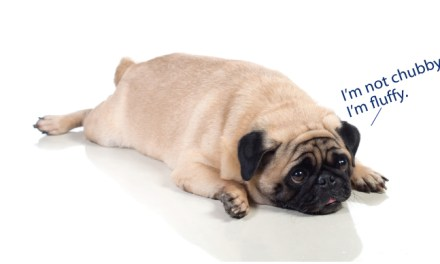 5 easy steps to help your dog drop the extra weight