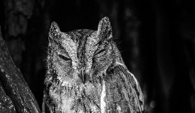 oiseaux en N&B - © Gilles Adt