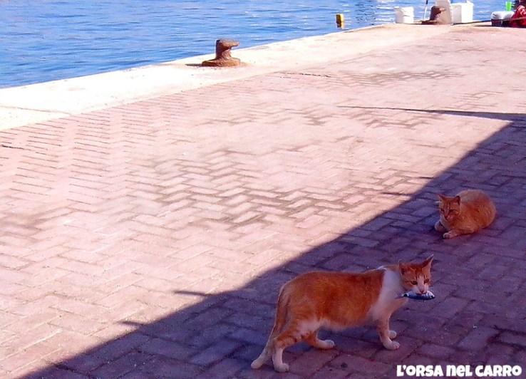 gatti3