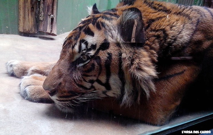 praga-zoo2