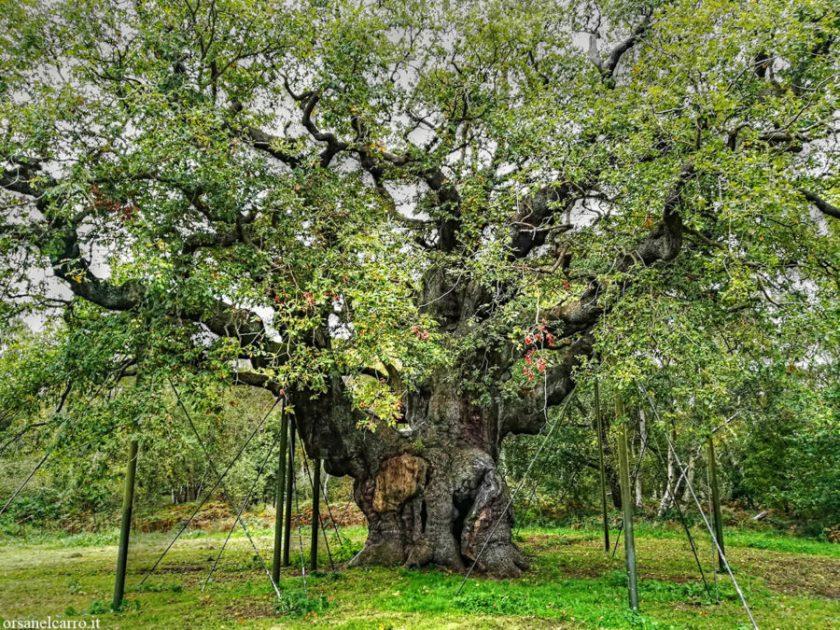 Foresta di Sherwood Major Oak