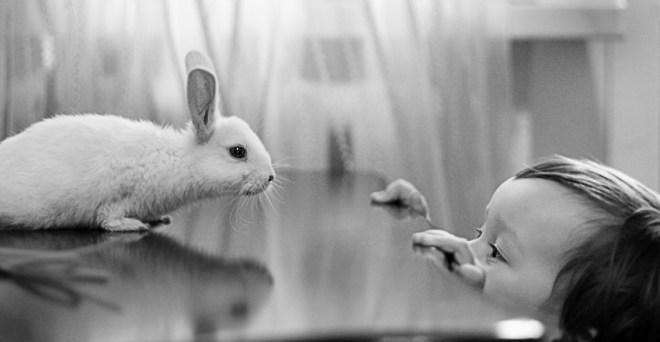 rabbit_of_pushistik_by_mechtaniya