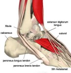Peroneal Tendon Instability