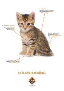 Se lo ami lo sterilizzi – Fonte: LAV