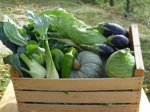 Fresh organic and seasonal vegetables grown at 0km arranged in a crate