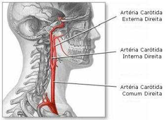 arteriassecundarias2